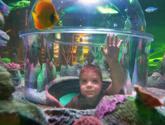 photo of child in tunnel viewing fish at Sea Life Michigan Aquarium at Great Lakes Crossing Outlets in Auburn Hills, MI