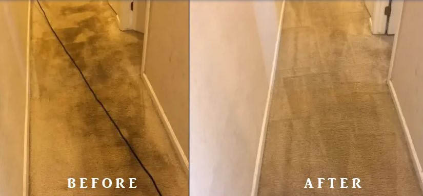 Professional carpet cleaning by Seattle Steamers Carpet Cleaning - Everett carpet cleaners - carpet cleaning in Everett, WA - carpet cleaning in Seattle, WA - Seattle carpet cleaners - carpet cleaning coupons near me