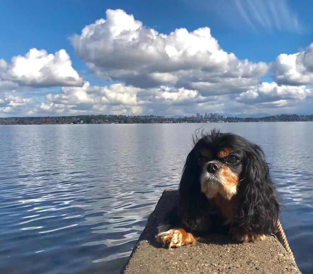 Seattle, Washington - Zen Dog Walking - dog walking services - professional dog walkers in Seattle - dog walking coupons