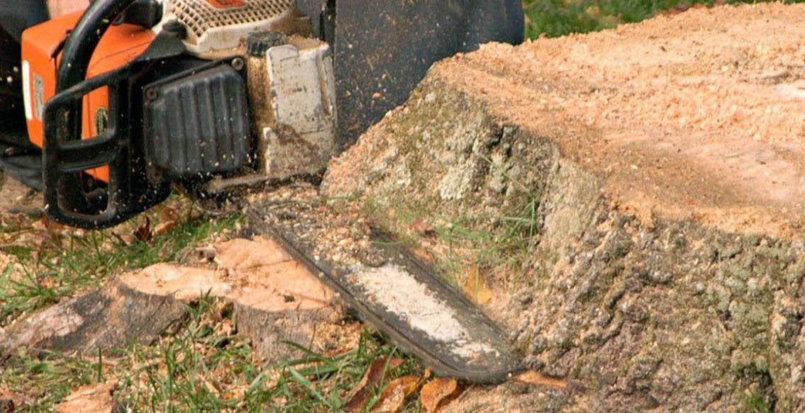 tree removal service in Deerfield, IL