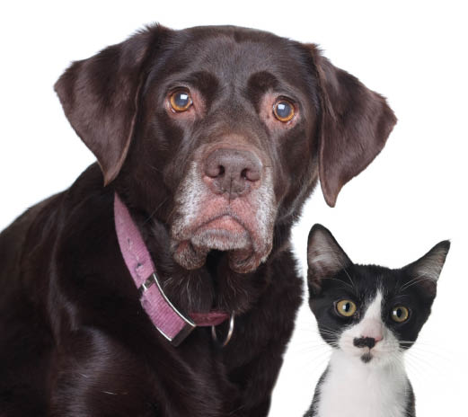 The Pet Door Store - providing relief to cats and dogs and their people since 2003 - pet doors for cats and dogs
