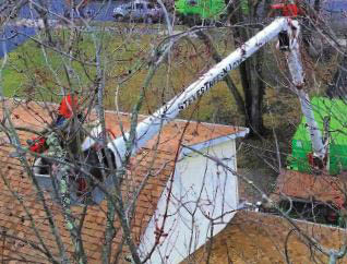 tree removal, pruning, clean up