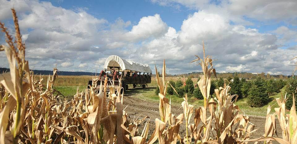 Stocker Farms hayrides - Snohomish, WA