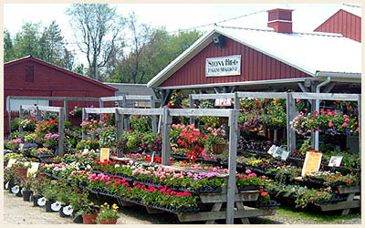Huge variety of plants to choose from at Stony Hill Farms in Chester NJ