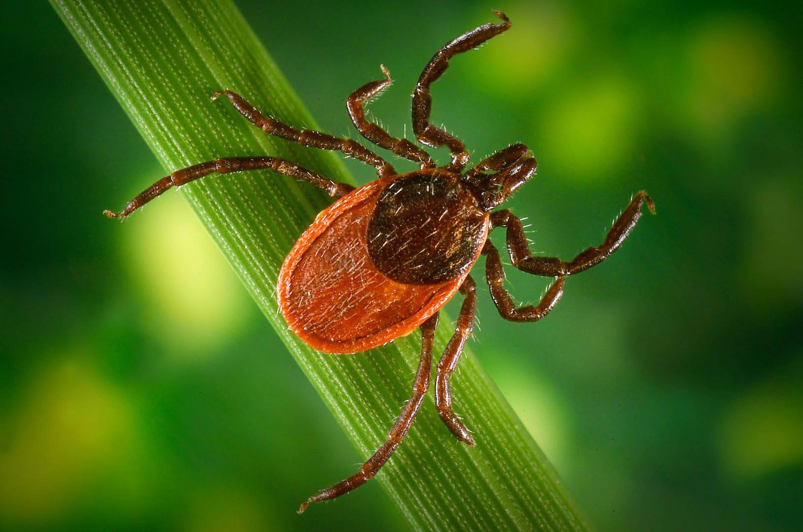 Mosquito Crush eliminates ticks near Orono, MN