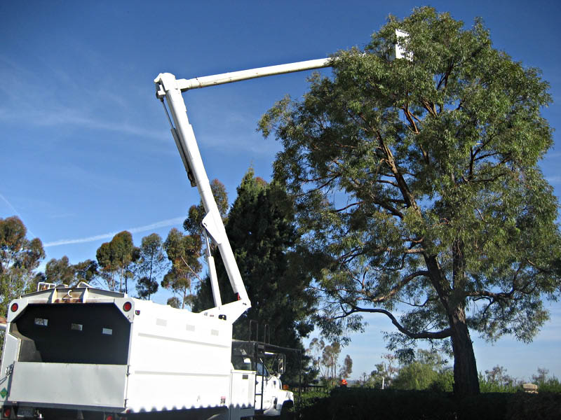 We have heavy equipment to perform tree work at nearly any height