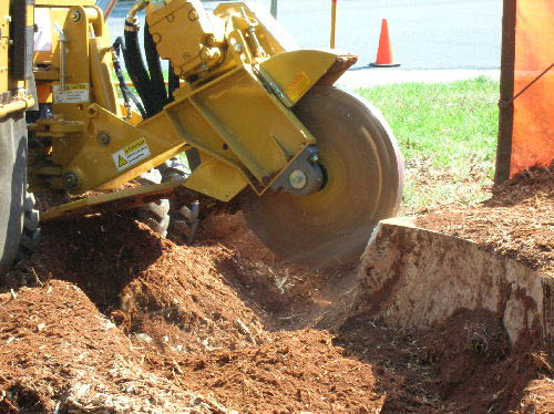 Expert Tree Stump removal promo code Rochester ny