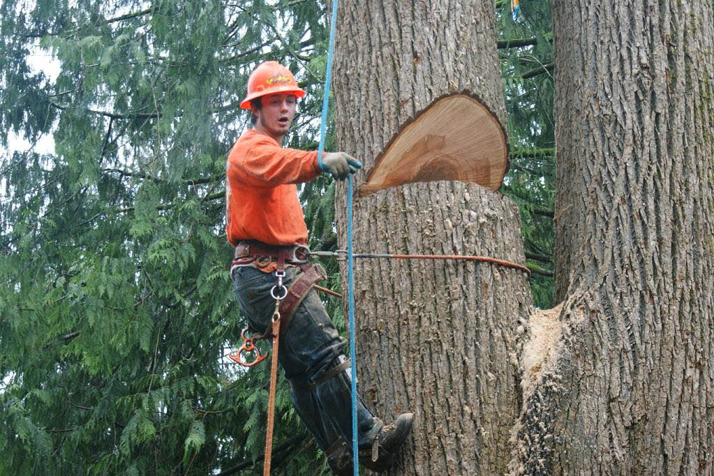 Sunrise Landscaping & Tree Removal - Lacey, WA - Olympia, WA - tree removal - tree service