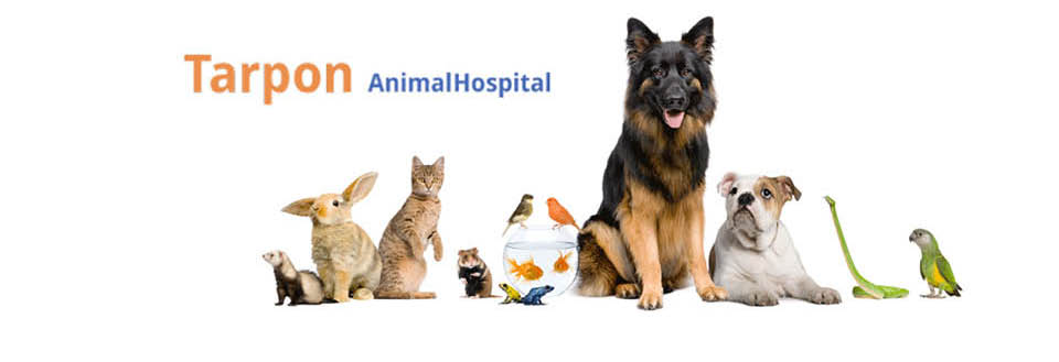 Tarpon Animal Hospital in Tarpon Springs FL banner