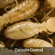 This exterminator can rid your home or office of termites.
