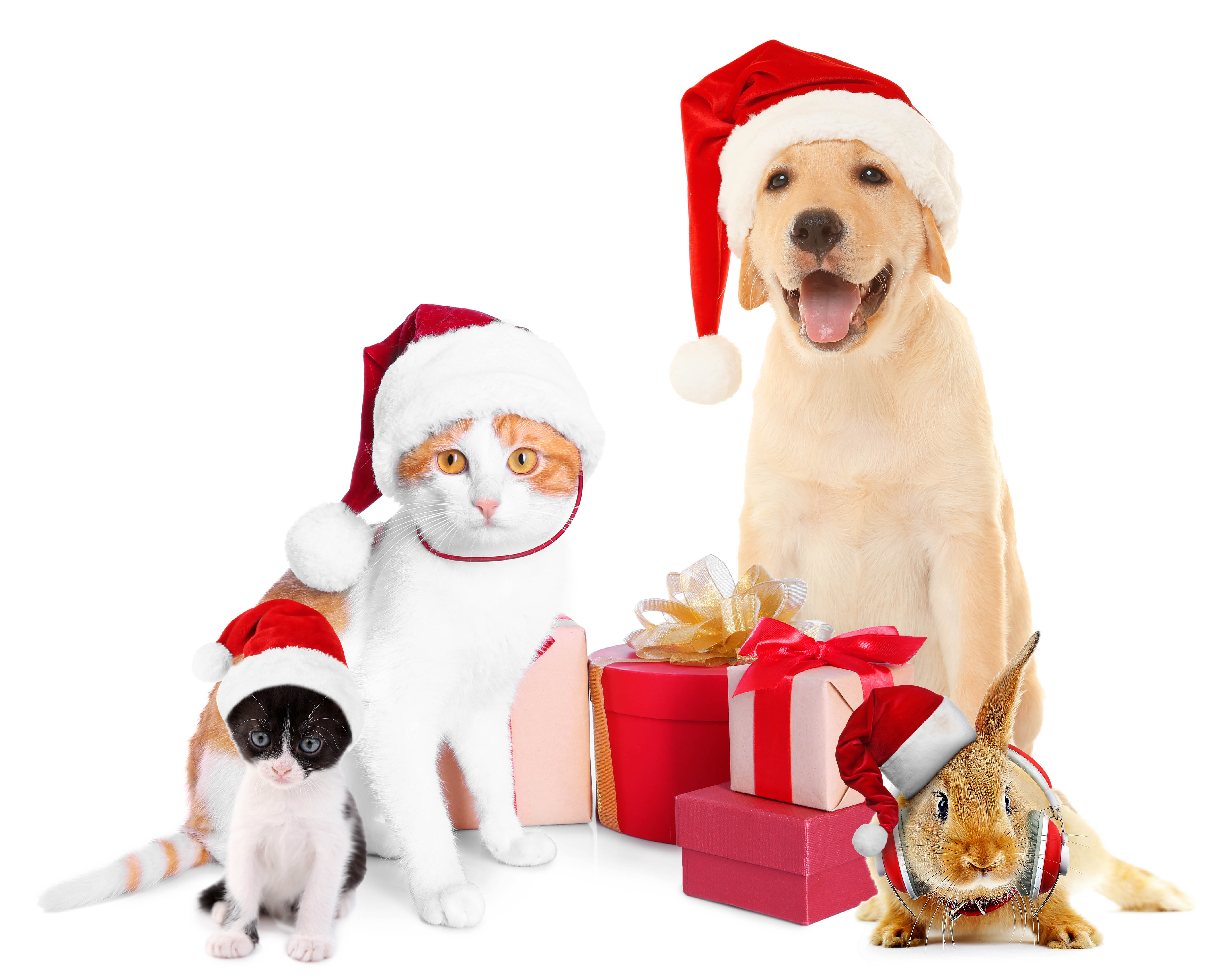 The Grange - Issaquah, WA - Healthy holiday gifts for your pets - pet food - pet treats - pet supplies
