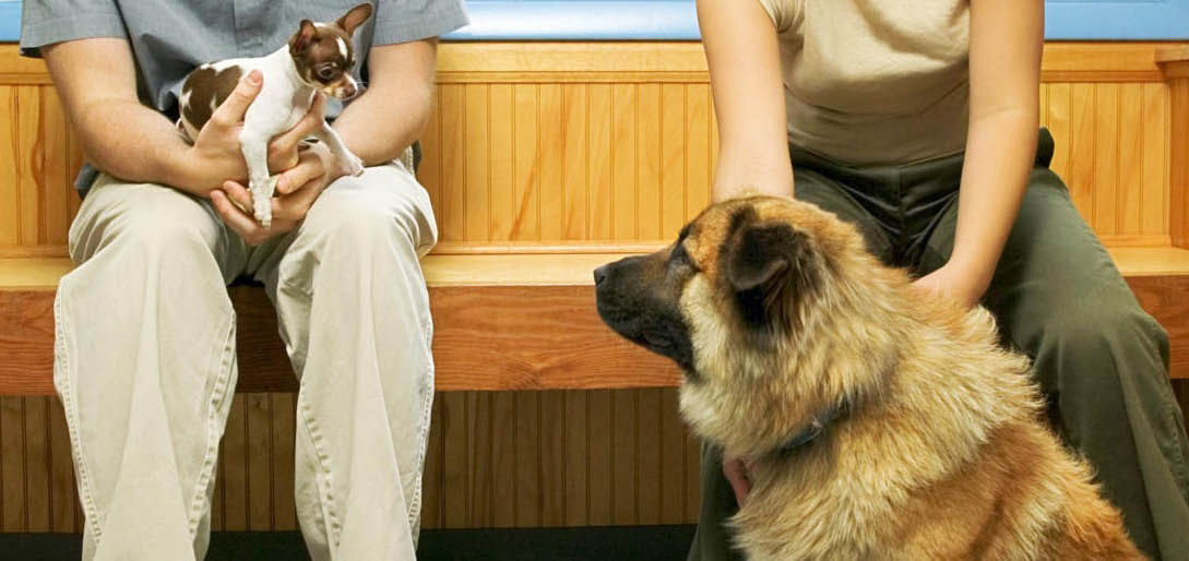 Call The Animal Clinic in Santa Clara today for convenient appointment hours