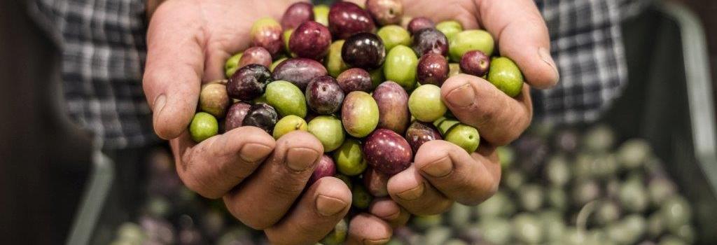 spicy olive cincinnati west chester miamisburg ohio