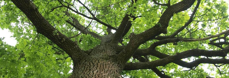 Total Tree & Shrub Fertilization Banner