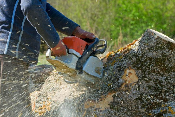 Total tree maintenance services in Atlanta, GA