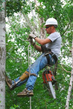 Atlanta Wood Tech Tree Services has the proper equipment and tools for any tree job