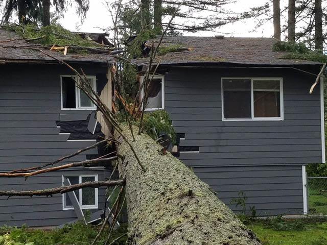 DC Tree - tree service - tree removal - Chehalis, WA