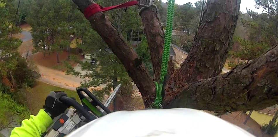 Armer Tree Care - tree removal companies near me - tree services near me - Snohomish County tree service companies - tree removal coupons