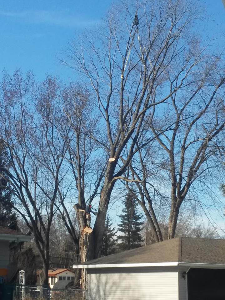 Midwest Tree Experts Chaska, MN