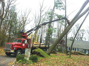 Tree work performed by Tree Chief Specialists in Dover NJ