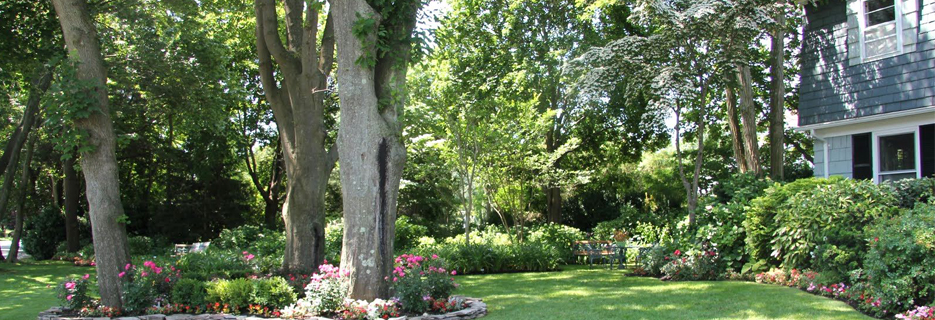 JT Arborists green trees in your yard