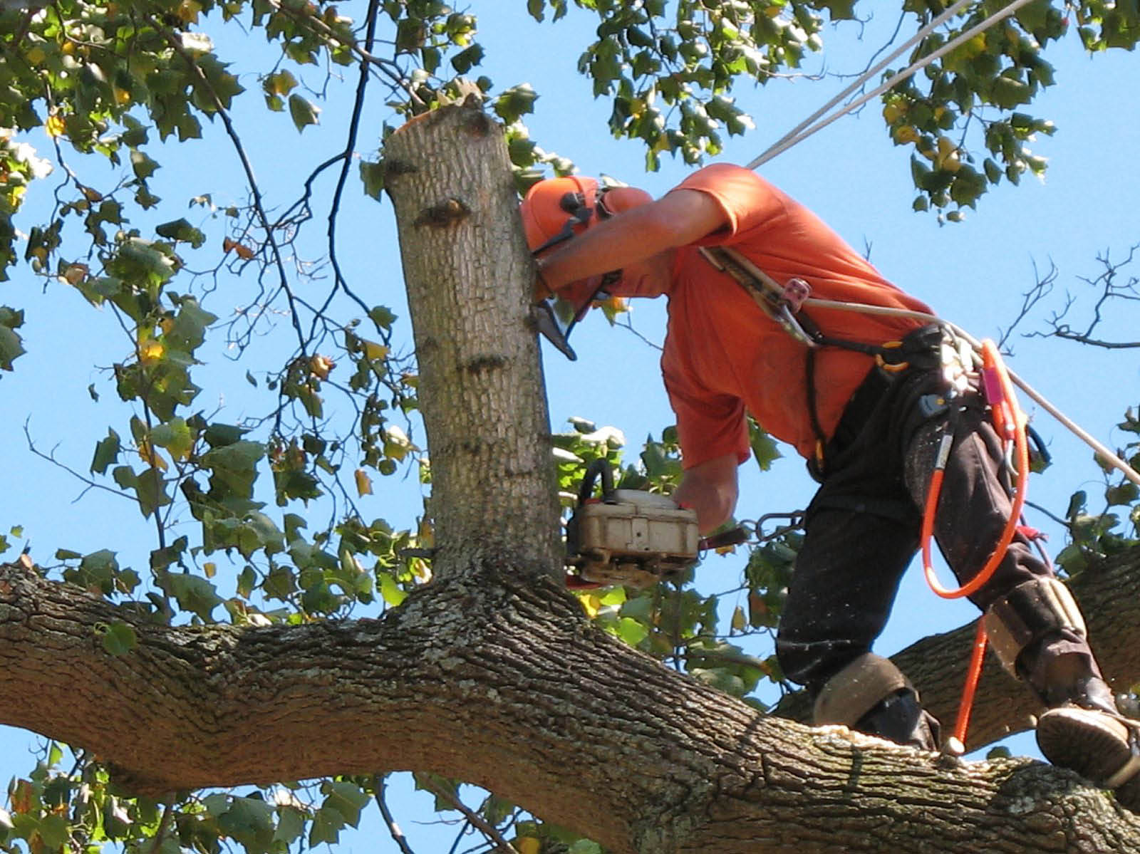 Tree limb removal and haul away services from F.M. Tree Services, Houston