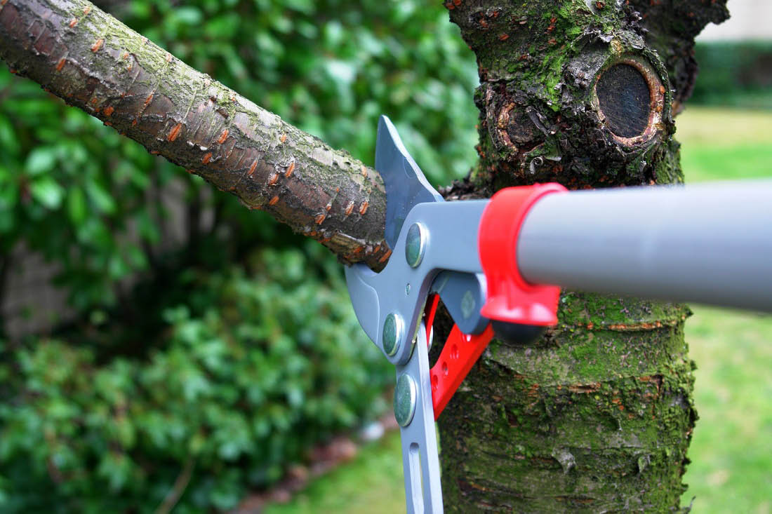 Tree branch cutting, clipping and tree limb removal in Houston, TX