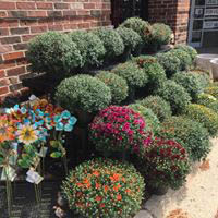 Plants and other greenery available in Lake Forest True Value