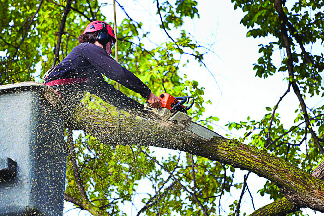 mn tree removal