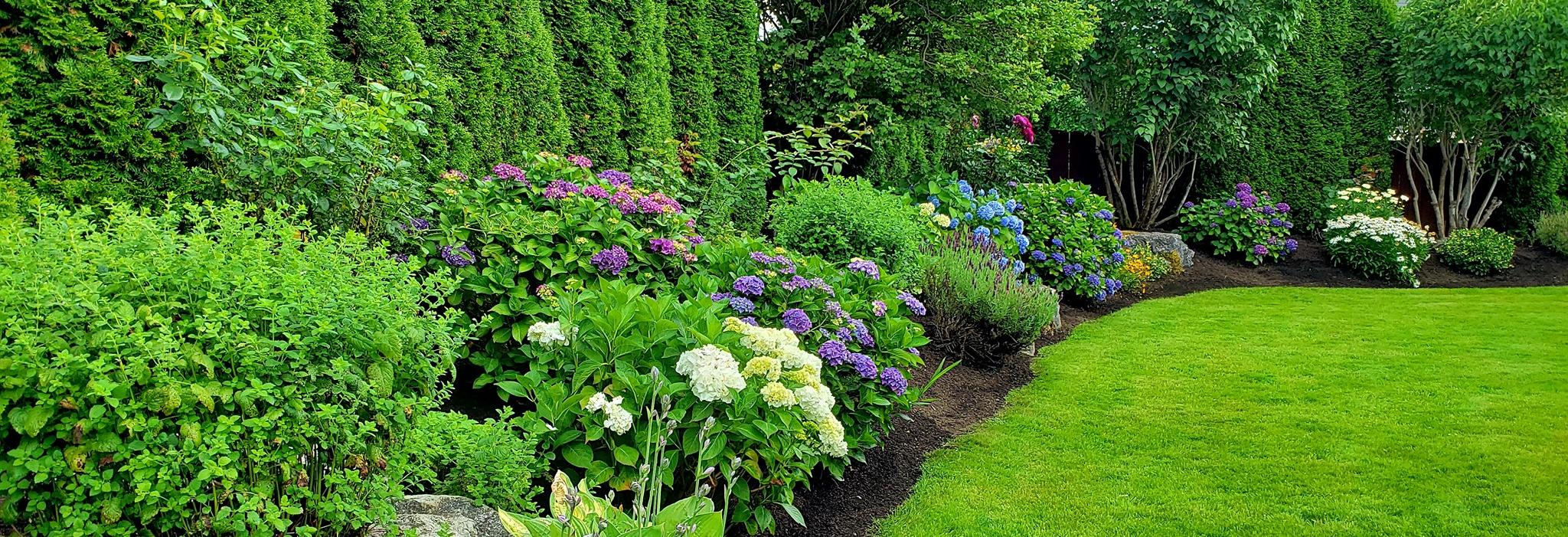 Tyler's Lawn Salon in Everett, WA banner image - landscapers in King County and Snohomish County