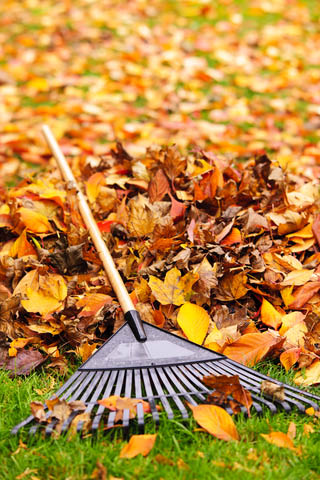 Yard clean up by Tyler's Lawn Salon in Everett, WA - professional landscaping contractors - raking leaves - leaf removal - professional lawn care - professional landscapers near me - lawn care coupons near me