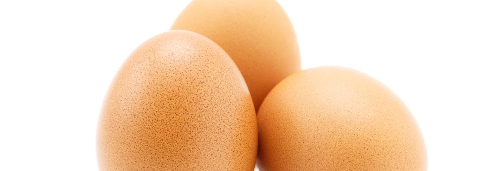 U.S. Egg banner Scottsdale, AZ