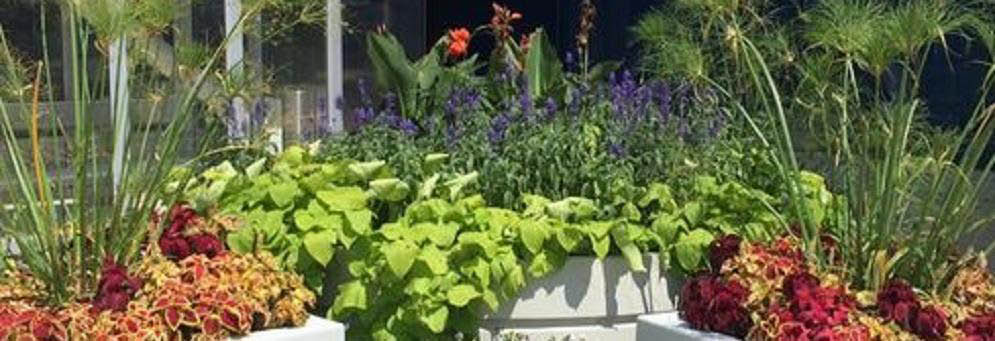 photo of plants from United Lawnscape, Inc,. in Washington Twp, MI