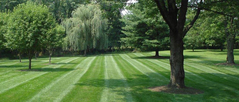 landscaping companies olathe, lawn mowing olathe, tree work olathe, mulch johnson county, top soil delivery johnson county, landscaping companies johnson county, lawn mowing johnson county, tree work johnson county, mulch johnson county, lawn kansas city