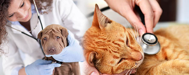 Value Pet Clinic - experienced veterinarians to take excellent care of your cat or dog - South Hill - Puyallup, WA