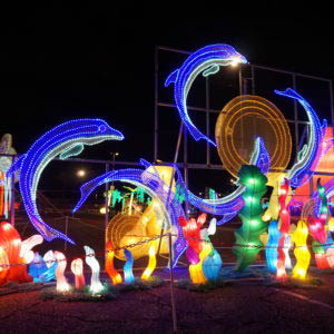Dolphin Lights exhibit at the Vernon Lights Festival in Vernon NJ