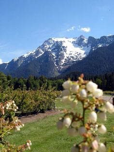 Beautiful view of the mountains at Mountainview Blueberry Farm in Snohomish, WA