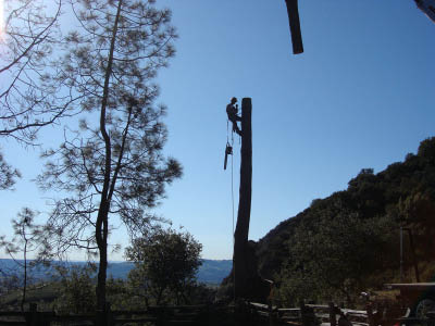 Contact us for removal of dead or dying trees.