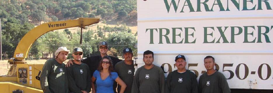 Waraner Tree Experts in Clayton, CA banner ad