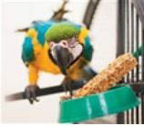 Bird food, feeders and bird treats