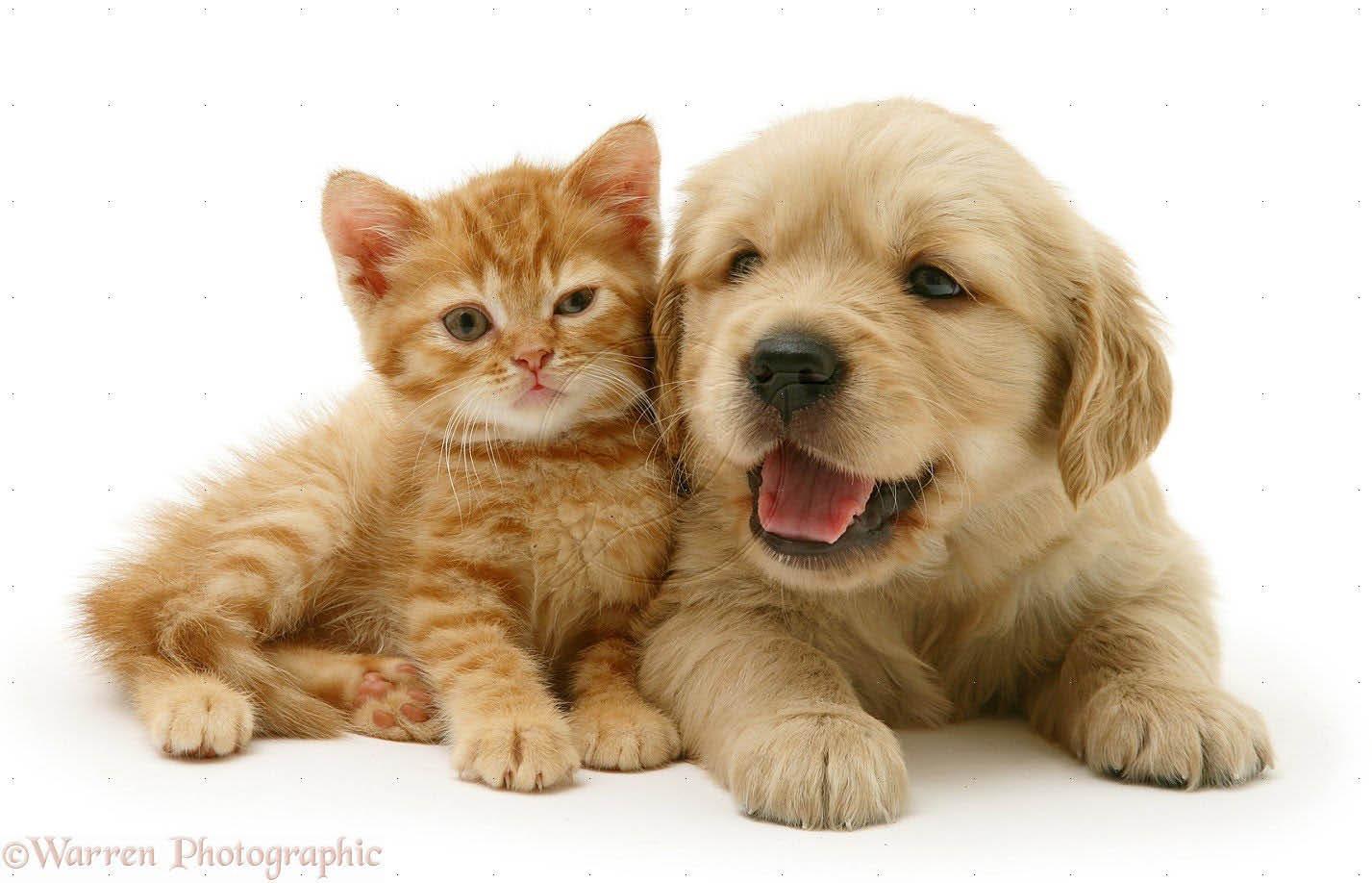 Pet Supplies in Elizabeth, NJ - Whiteway Pet Shop Coupons - White Way Pet Store Coupons