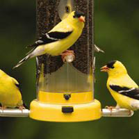 wild birds; finches; cylinder bird feeder; birding supply in Roscoe, IL