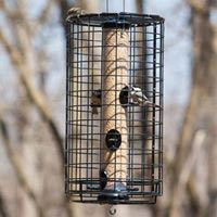 wire bird feeder; squirrel prevention; bird feed; bird seed stores; online birding supplies