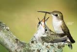 wild birds unlimited bird seed bird feeders florence kentucky hummingbird feeder