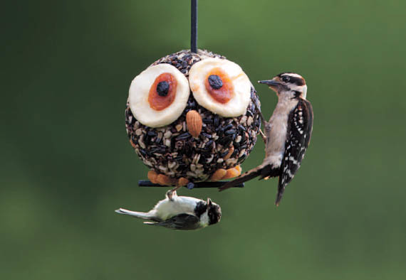 wild birds unlimited bird seed bird feeders florence kentucky nectar feeder