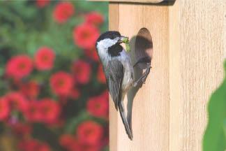 photo of bird on bird house at Wild Birds Unlimited in Royal Oak, MI