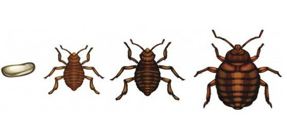 Savings, wildlife management, bed bugs, insulation, installation, removal, omaha, Greater Omaha, bed bug heat treatments, services, coupons, experience, skills, tools, property, guaranteed results
