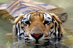 zoo discounts, zoo website, zoo with aquarium, zoo pass