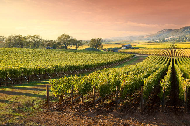 Tour California's Napa Valley Wine County in style