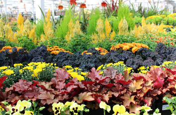 Molbaks Garden and Home in Woodinville, WA - huge nursery - plants - shrubs - trees